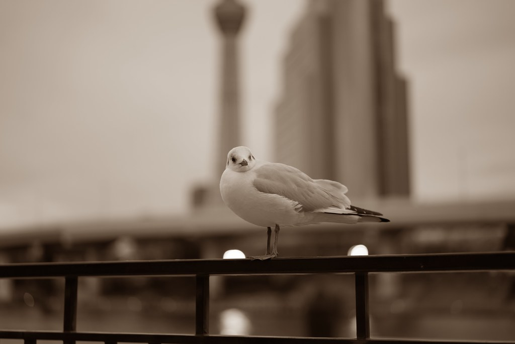 sea gull & Skytree