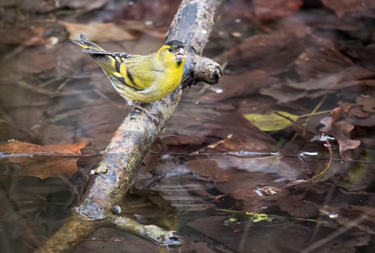 Serveur, un jaune avec de l'eau svp ! 40007532293_f632098bf1_o