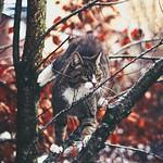 Cat Bokeh - 19. Januar 2015