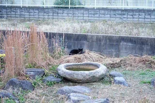 Today's Cat@2018-11-13