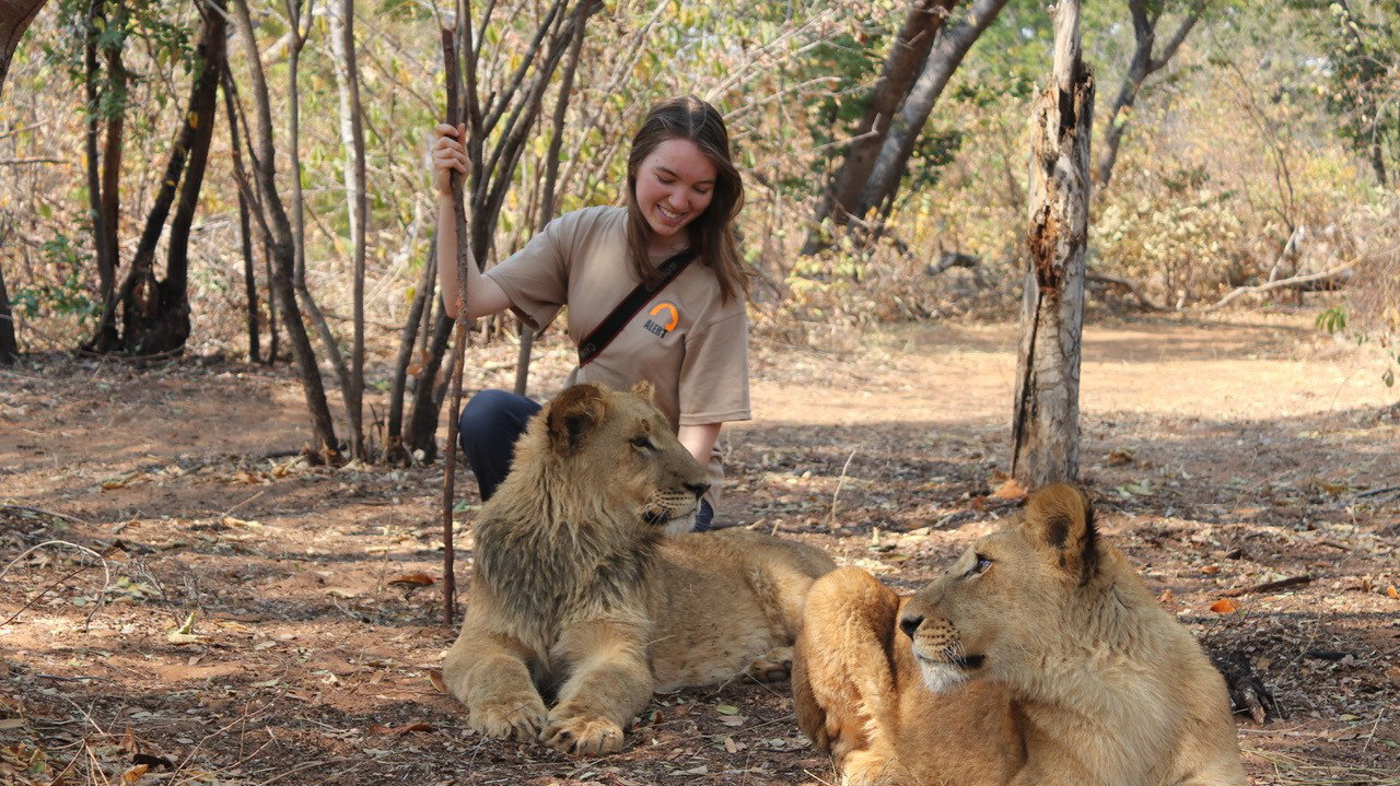 Helen Mylne with two lions in Africa