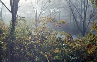 A tiny forest misty in the morning