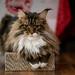 038 - cats cats cats- B9504252