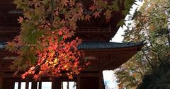 autumnon gate