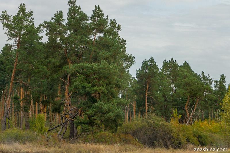 Сосновый бор, Воронежская область