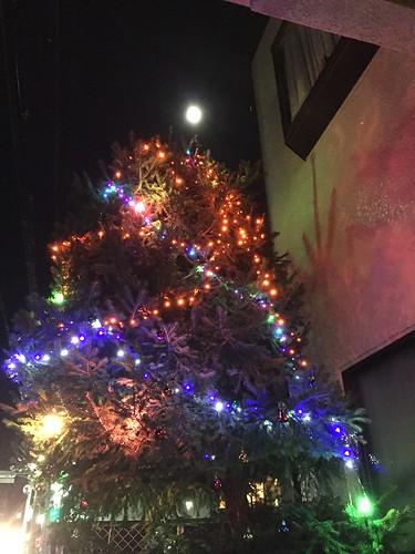 もみの木と満月。クリスマスのかざりつけ
