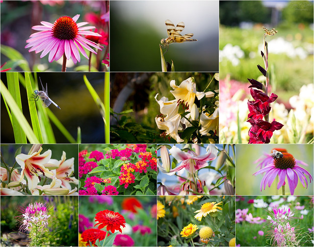Central Park Biblical Gardens