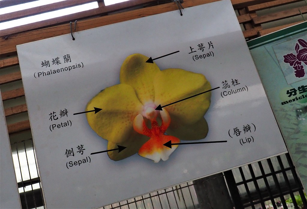 山上蘭科植物園 (23)