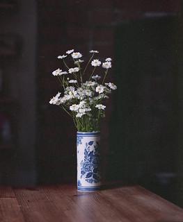 Camomile, Chinese vase