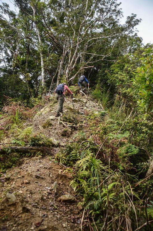 戶張山登山山徑 (2)