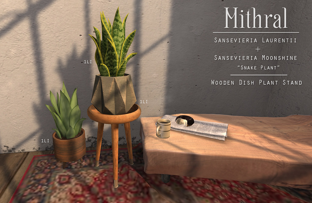 Mithral – Snake Plant and wooden plant stand