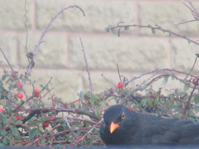 BLACKBIRD, Canon IXUS 132