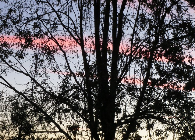 Tree, Sky And Pink, Canon POWERSHOT ELPH 520 HS