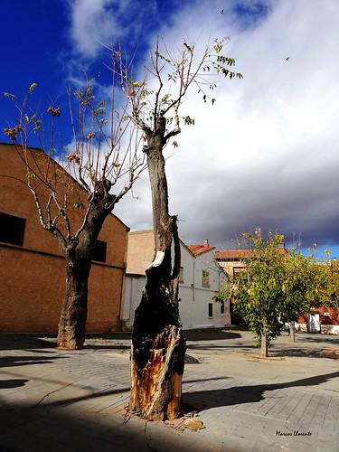 Cariñena 10112018 (3)