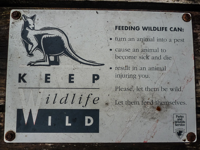 Do not feed wild animals