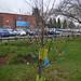 Shirley Park - Tree of Hope