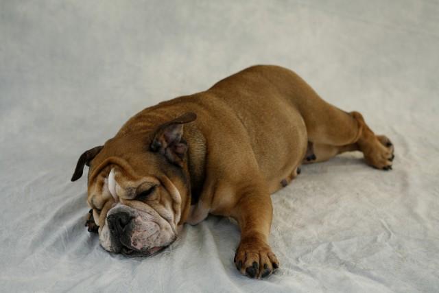 救急動物病院受診が必要かもしれない犬