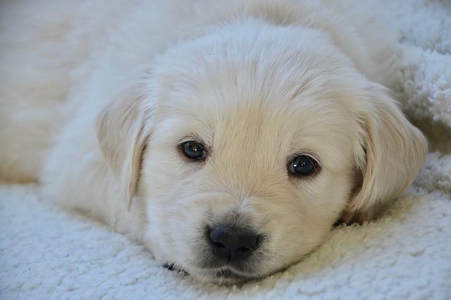 飼う前の準備として学ぶ必要がある子犬の成長