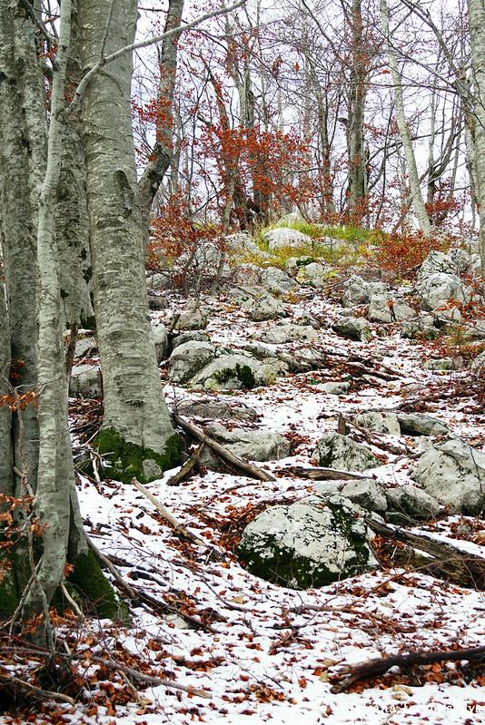 В буковом лесу