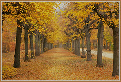 Golden Alley