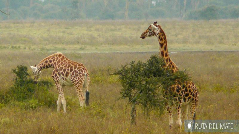 Animales hacer un safari P1130607