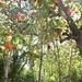 Autumn in Winter - Almond Tree on island