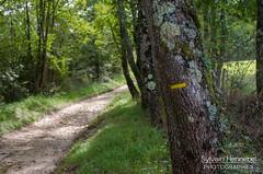 Sentier dans le Comminges - Photo of Cazeneuve-Montaut