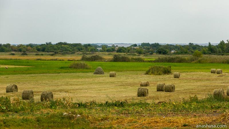 Убранные поля, Воронежская область