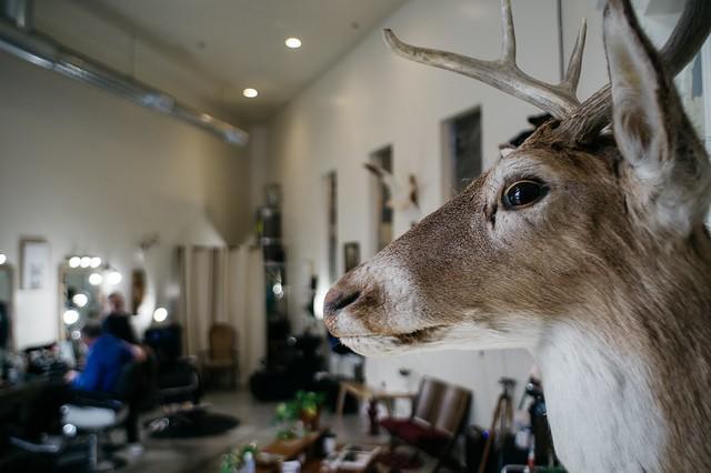 Barbershop deer, RICOH PENTAX KP, smc PENTAX-DA 21mm F3.2 AL Limited