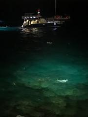 Manta dinining Rays on the bay Kailua Kona Big island Hawaii