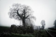 Tree Equirre - Photo of Gauchin-Verloingt