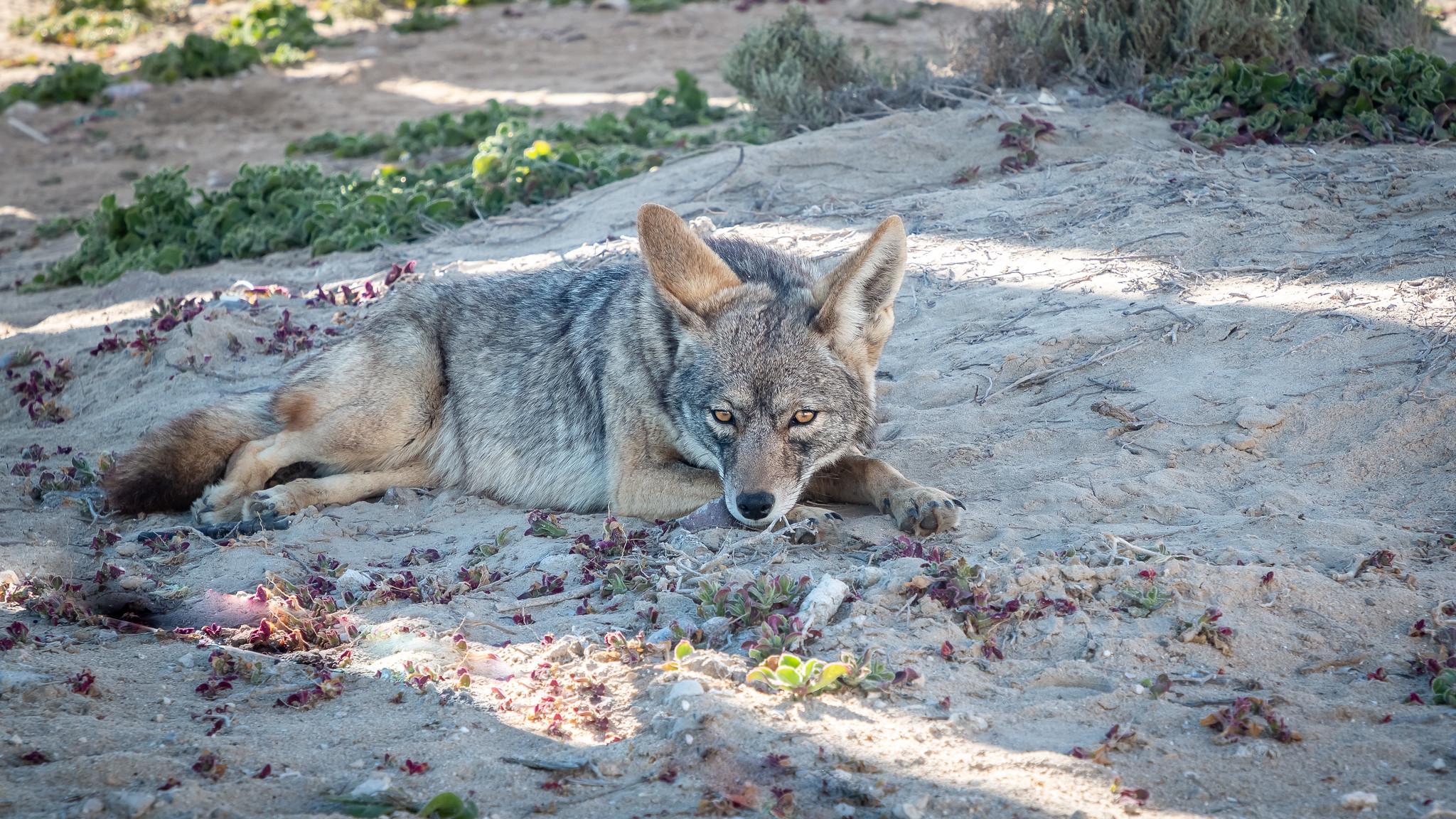 Ojo de Liebre - Basse-Californie du Sud - [Mexique]