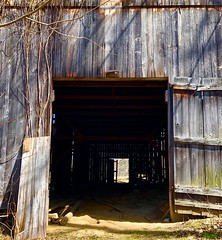 They found the falling down timbers Of a spooky old barn