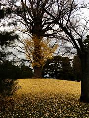 ginko mound