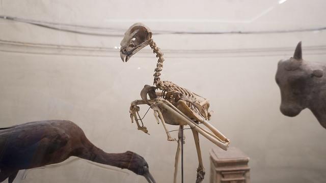 A bird skeleton at Egypt's Egyptian Museum of Cairo