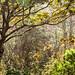 arboretumNC_11212018-0221