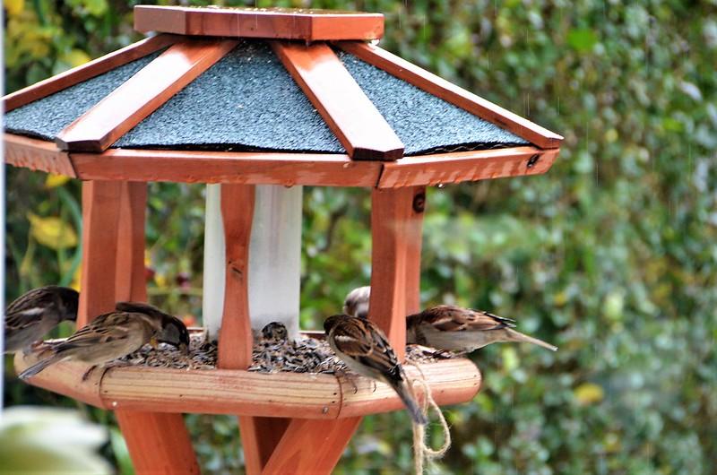 Sparrows 08.12 (12)