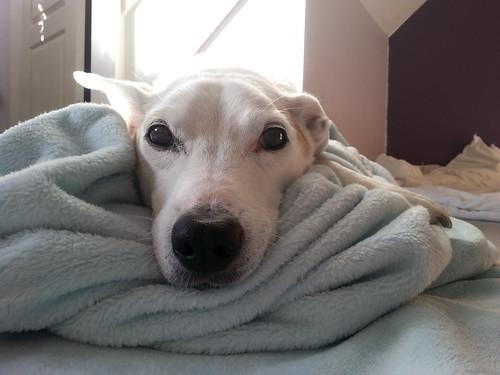 b--a-new-blanket_30151533115_o