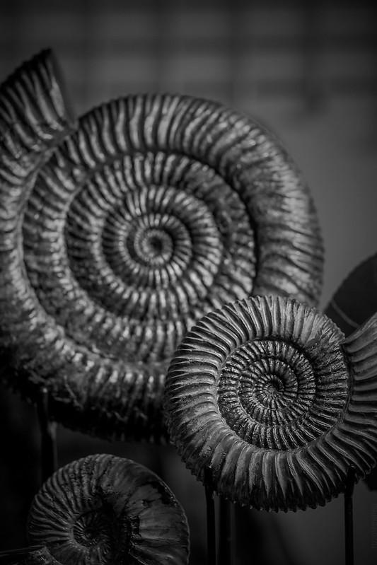 2018.12.15_349/365 - ammonites