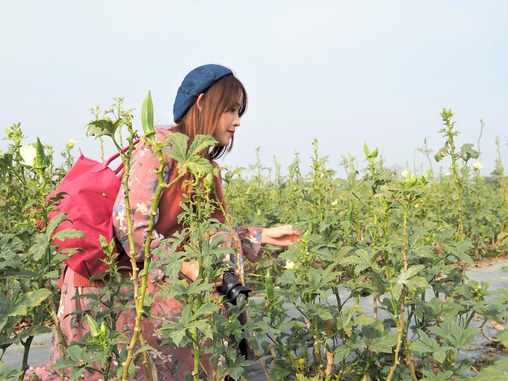 鹿草農業體驗 (1)