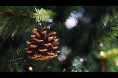 Pine Cone for the Christmas Tree