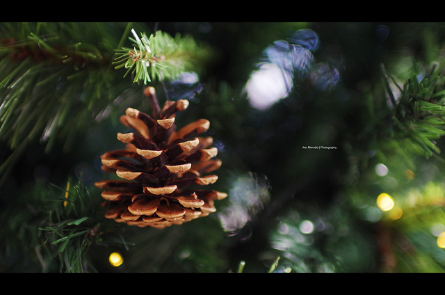 explore Pine Cone for, Pentax K-50, Sigma 30mm F1.4 DC HSM | A
