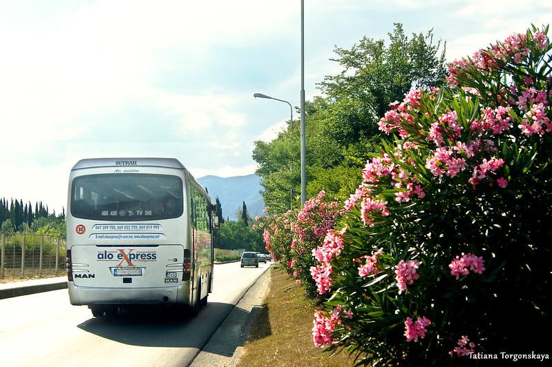 Междугородний автобус уезжает с автостанции Тивата