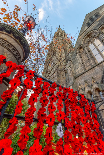 Mayfield Salisbury100yr Poppies