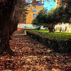 #Buongiorno Sapienza e #buonadomenica con una foto dei viali della Città universitaria di @zak_89_giovanni ・・・ #Repost: «[Autumn, Sapienza 2018] #autunno #autumn #foglie #rosso #arancione #marrone #nature #street #rome #roma #sapienza #università #igersit