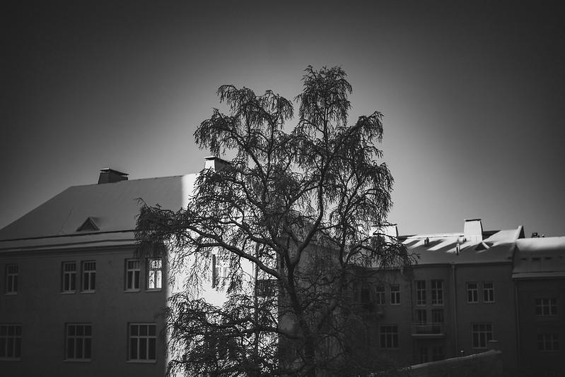 Winter sun-3