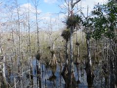 20170211 38 Everglades National Park