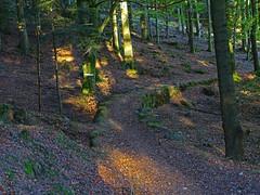Dernière grande randonnée - Photo of Salenthal