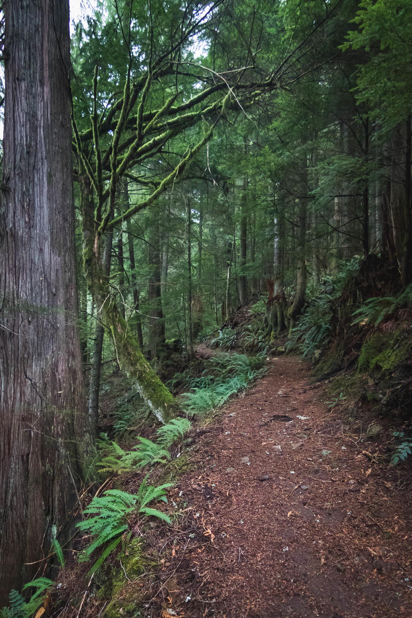 This way to Florence Peak