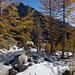 Mountain Goats in Headlight Basin